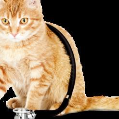 Diete e Antiparassitari Gatti