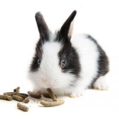 Mangime Per Conigli, Roditori e..