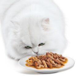 Alimenti Umidi