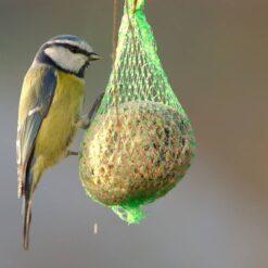 Mangimi Per Uccelli