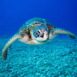 Mangime per rettili (tartarughe..) e piccoli animali